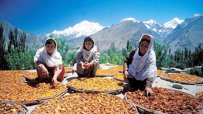 долгожители племени Хунза используют абрикос