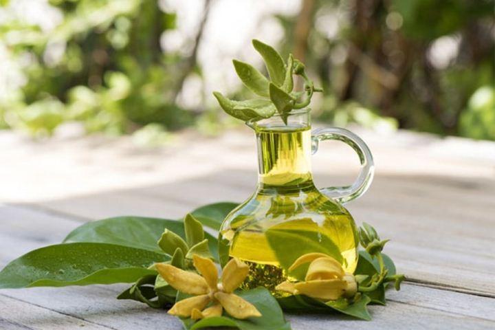 Как и почему стоит использовать эфирное масло иланг-иланг