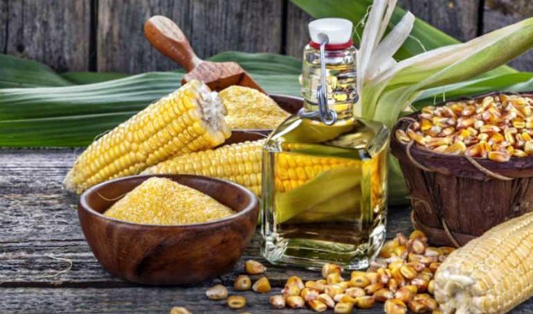 Кукурузное масло - польза, вред и противопоказания