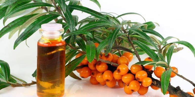 От чего помогает и что лечит облепиховое масло?