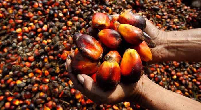 Пальмовое масло опасно для организма - распространенный миф или реальность?