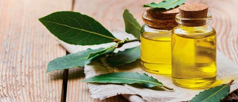 Лавровое масло (21 фото): применение эфирной жидкости для лечения суставов и волос. Как сделать масло из лаврового листа в домашних условиях?